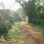 morgen i bushen